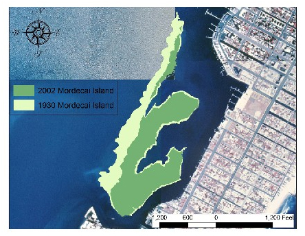 Southwest Mordecai Ecosystem Restoration Project