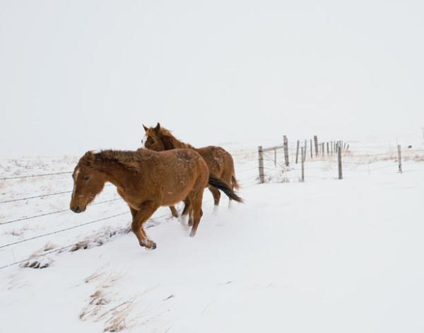 Northern Montana's Hi-Line