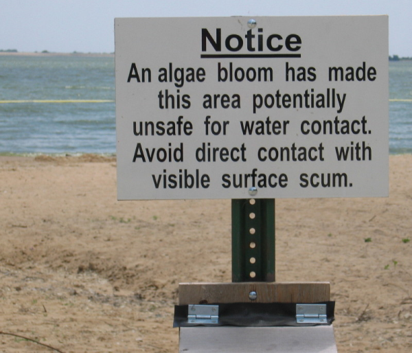 AlgaeBloomSign MarionReservoirKS 003 l resized 600