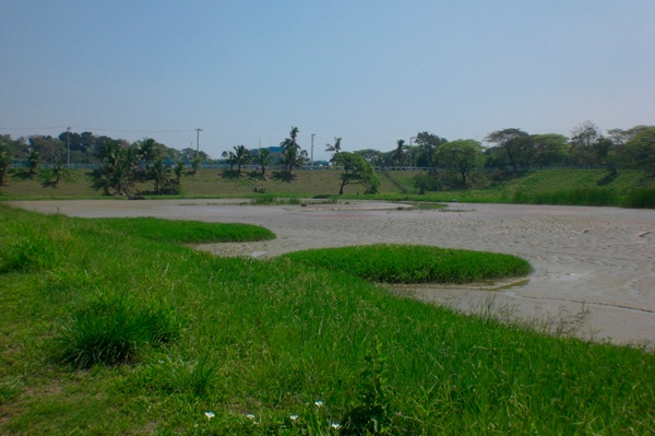 blog_grassandwater