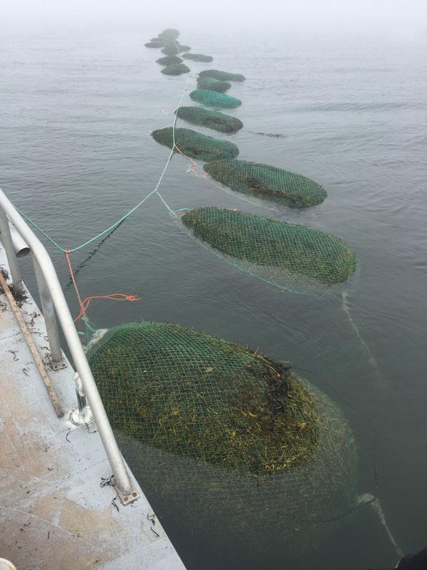 Seaweed-Bag